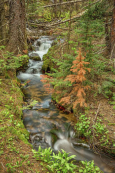 Rusty The Pine Tree and The Flowing Stream by James BO Insogna