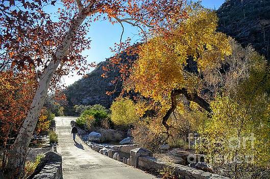 Bridge and Fall Colors at Sabino Canyon by Rincon Road Photography By Ben Petersen