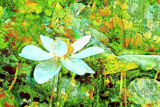 Sacred Lotus painted art series by Geraldine Scull