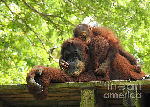 Safe With Mom by Lisa L Silva