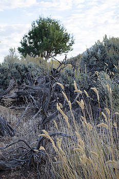 Sage and Grass by Sharon Wunder Photography