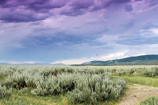 Sage Fields  by Dawn Romine