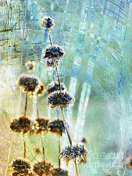 Sage Plant by Robert Ball