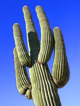 Mike McGlothlen - Saguaro Cactus - Arizona