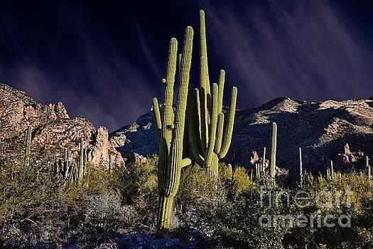 Saguaro Dawn by Henry Kowalski