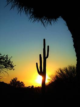 Saguaro Silohuette by Nelson and Cheryl Strong