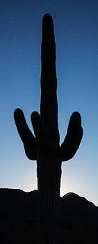 Saguaro Twilight Arizona by Steve Gadomski