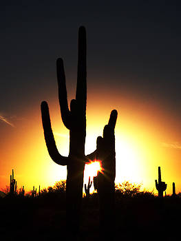 Saguaro with Sun Star by Alan Socolik