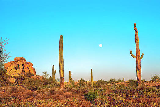 Saguaros with Moon Rise by Sally Weigand