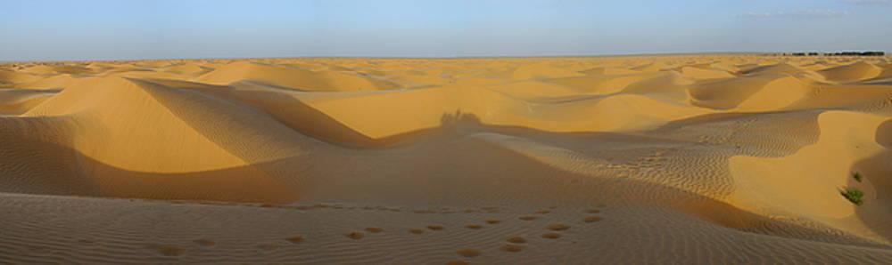 Sami Sarkis - Sahara Desert at sunset