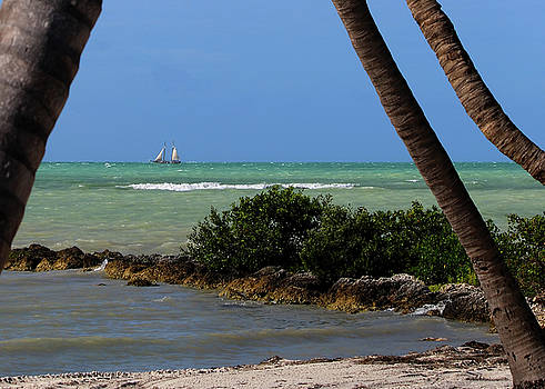 Sailing Between the Palms by Ron Grafe