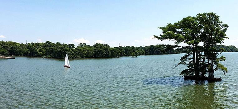 Sailing by Carolyn Ricks