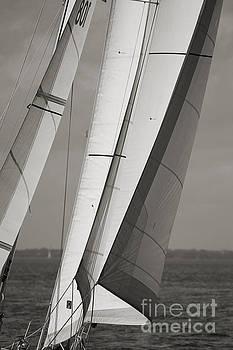 Sails of a Sailboat Sailing by Dustin K Ryan