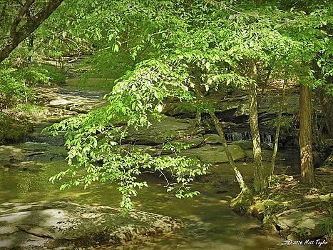 Salem Lake Trail Scenic Creek by Matt Taylor