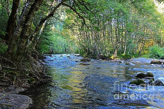 Salmon Creek Majestic  by Tim Rice