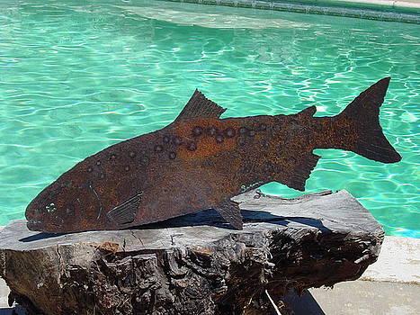 Salmon by Steve Mudge
