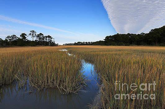 Salt marsh at Hunting Island State Park by Louise Heusinkveld
