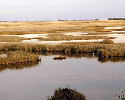 Marty Koch - Saltwater Marsh