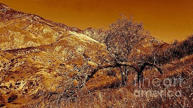 San Bernardino California Mountain by Michael Hoard