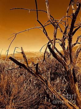 San Bernardino California Mountain View by Michael Hoard