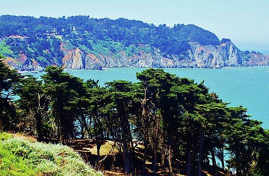 San Francisco Cypress Trees and Pacific Ocean by Peggy Leyva Conley