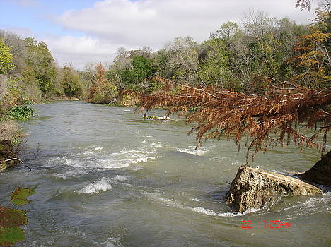 San Marcos River by Martha Roehrick