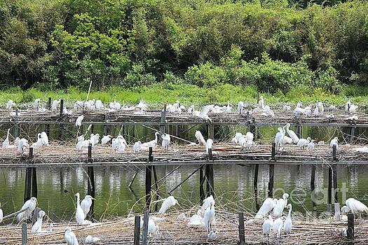Chuck Kuhn - Sanctuary Louisiana Avery Island