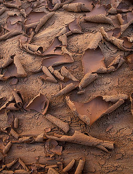 Sandra Bronstein - Sand and Mud Curls