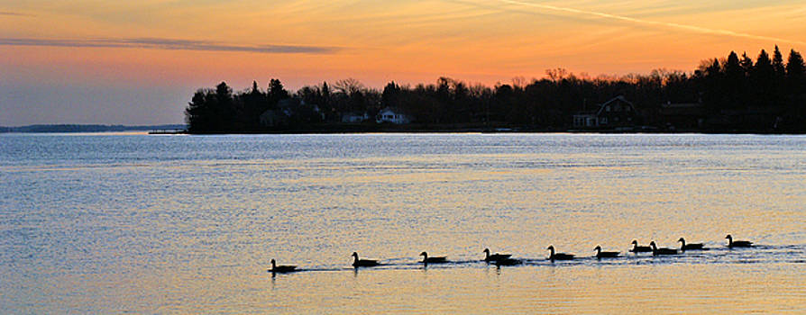 Sand Bay Geese by Bill Morgenstern