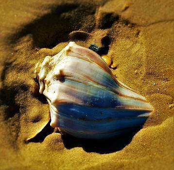 Sand Shell by William Bartholomew