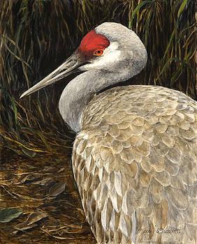 Sandhill Crane - Realistic Bird Wildlife Art by Karen Whitworth