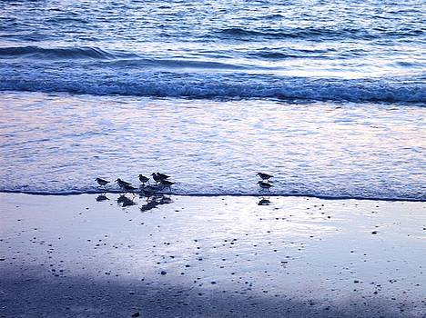 Sandpiper Beach I by Anna Villarreal Garbis