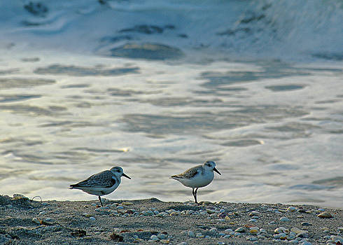 Juergen Roth - Sandpipers