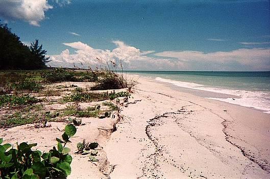 Sanibel Beach I by Anna Villarreal Garbis