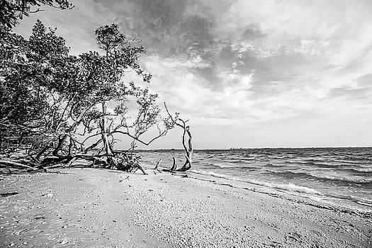 Sanibel Island Morning by Scott Pellegrin