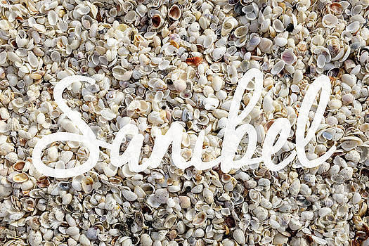 Edward Fielding - Sanibel Island Seashells