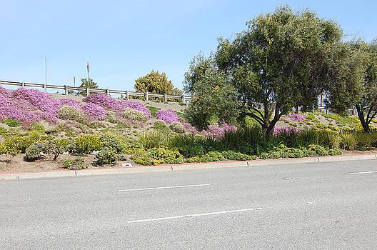 Santa Clara Highway by Carolyn Donnell