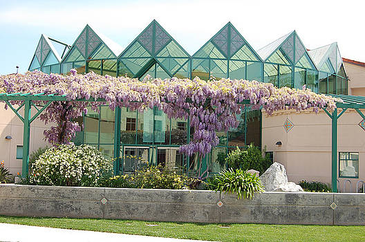 Santa Clara University in the Spring by Carolyn Donnell