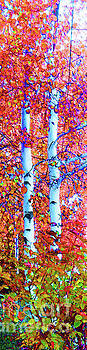 Santa Fe Aspen Forest Tryptic 3			 by Ann Johndro-Collins