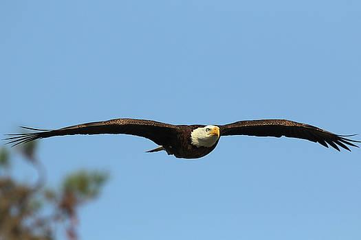 Sarasota Flight by David Yunker