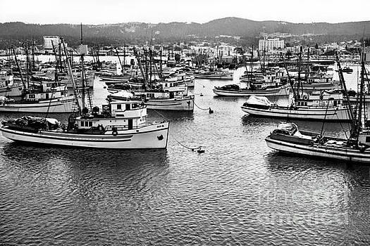 California Views Mr Pat Hathaway Archives - Sardine purse seiners Fishing Fleet At Anchor, Monterey Bay Aug. 1946