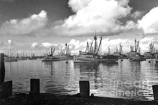 California Views Mr Pat Hathaway Archives - Sardine purse seiners Fishing Fleet At Anchor, Monterey Bay circa 1940