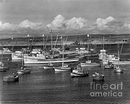 California Views Mr Pat Hathaway Archives - Sardine purse seiners Fishing Fleet At Anchor, Monterey Bay circa 1945