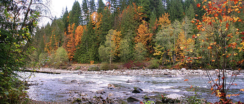 Sauk River Fall Colors Panorama by Mary Gaines