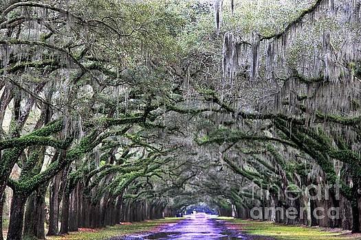 Savannah  by AR Annahita