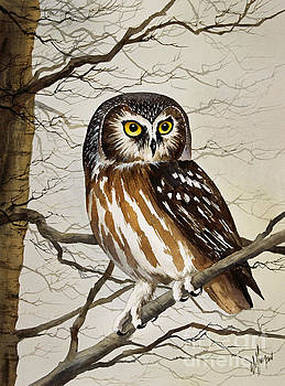 Saw Whet Owl by James Williamson