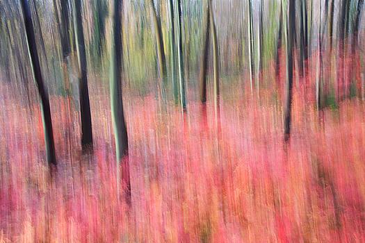 Sayen Gardens Autumn New Jersey by Binh Ly