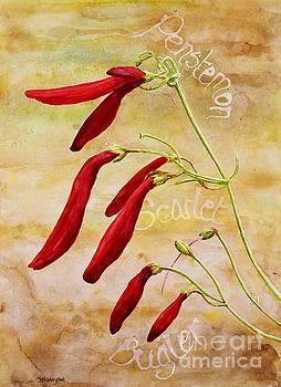 Scarlet Bugler by Shirley Miller