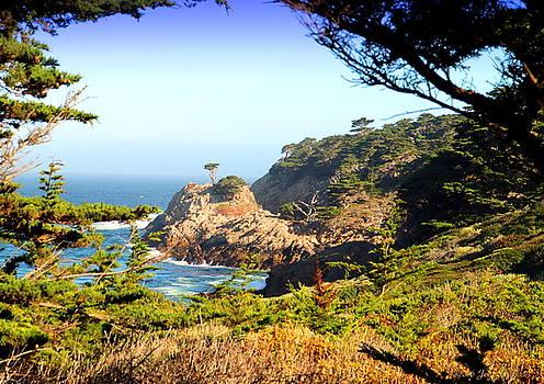 Scenic Point Lobos by Joyce Dickens