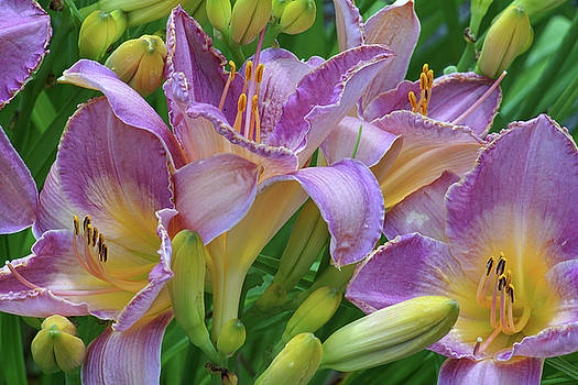 Scent of a Lily by Kathi Mirto